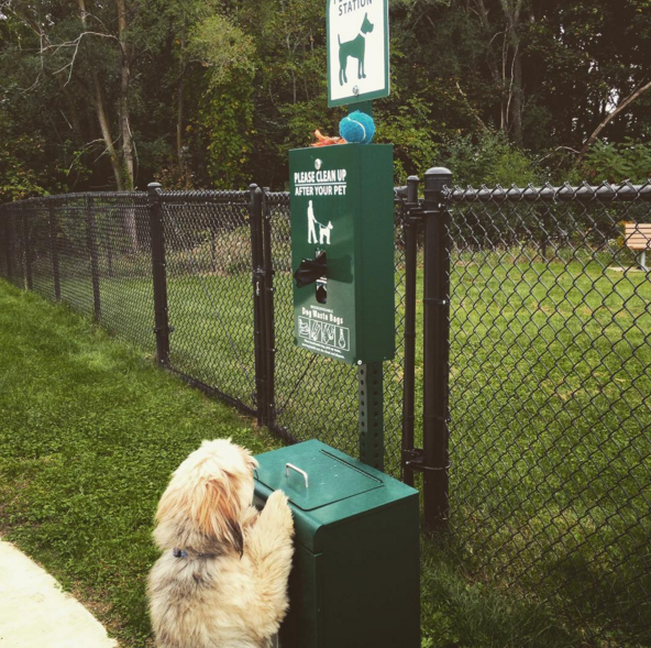 Someone S Trying To Get Into The Waste Bin At Fairmont Dog Park Kalamazoo Mi Angus Off Leash Dogs Puppies Cutedogs D Dog Park Beautiful Dogs Kalamazoo