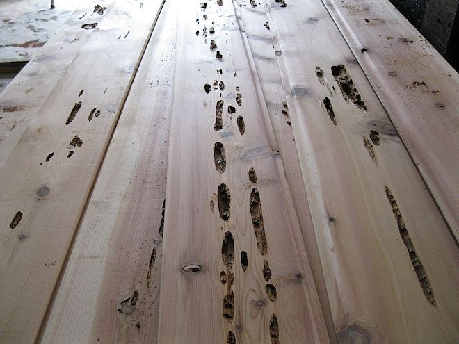 Pecky Incense Cedar Boards Closeup Buffalo Lumber Mel