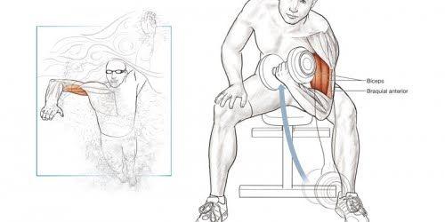Anatomía del nadador | Deporte | Pinterest | Nadadores, Anatomía y ...