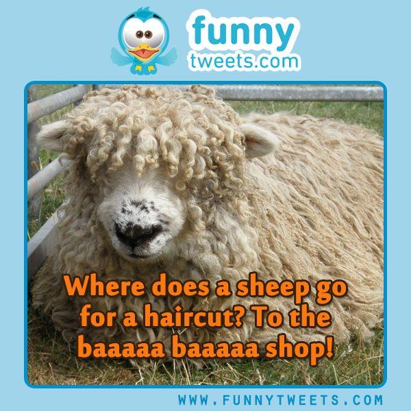 #funny #things to #tweet