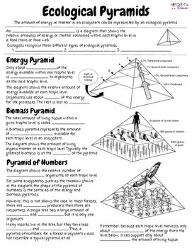 Ecological Pyramids With Images Ecological Pyramid Pyramids