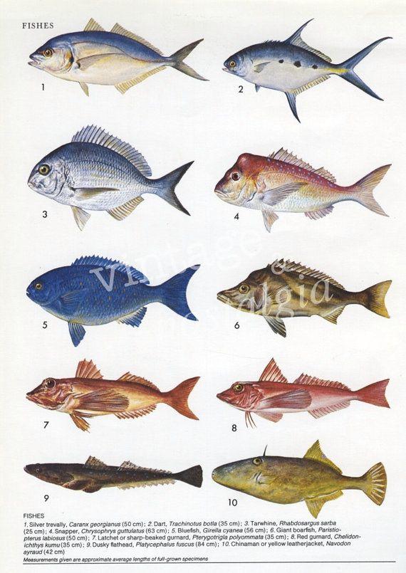 Vintage Australian Fish Print Fishing Fish Decor
