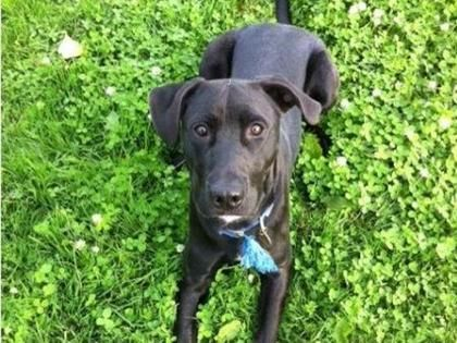 Search Rescue Pets In Need Of Adoption Today Pets Animal Rescue Rescue Dogs