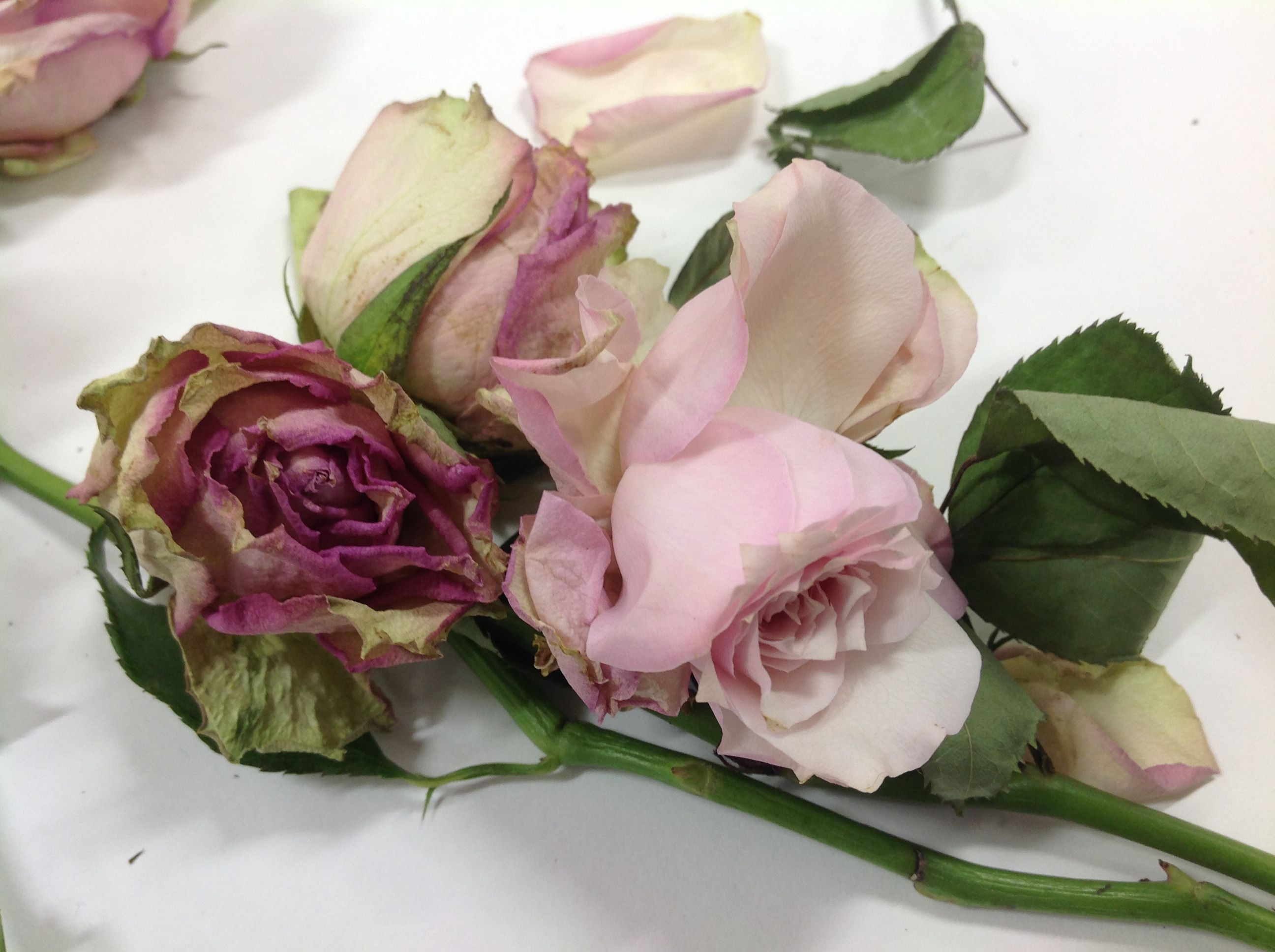 Pin by yagmur on flowers pinterest