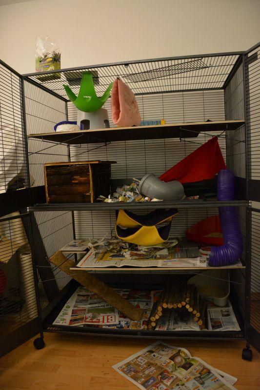 Savic Suite Royal Xl Pet Rat Cages Rat Cage Pet Rats