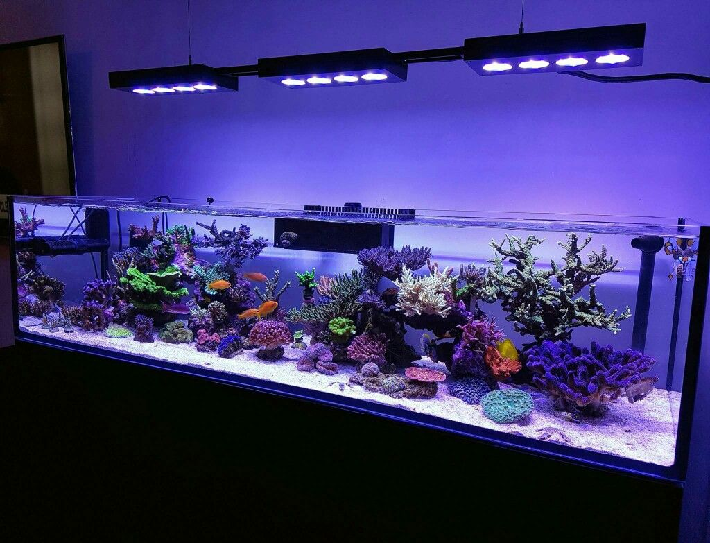 roleadro led aquarium beleuchtung dimmbar 165w meerwasser led aquarium lampe f r korallen fisch. Black Bedroom Furniture Sets. Home Design Ideas