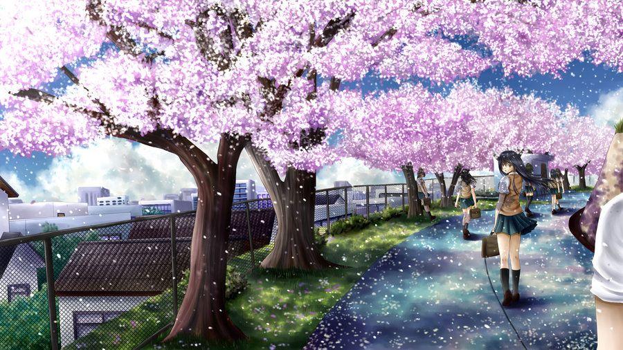 Cherry Blossom Path By Ilolamai Deviantart Com Anime Cherry Blossom Cherry Blossom Wallpaper Anime Scenery Wallpaper