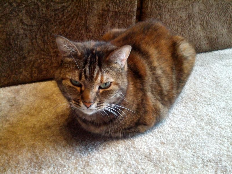 you better not put this picture of me loafing around on facebook.. (well pinterest isn't facebook)