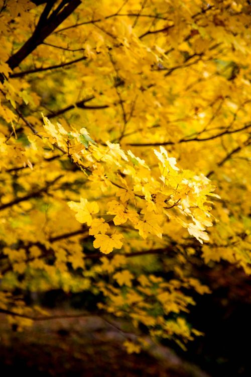 autumncamera:  Basic yellow