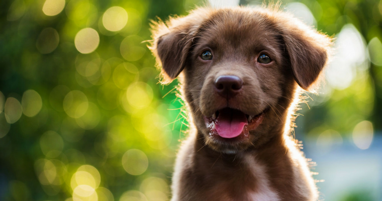 10 Things You Need Before Bringing Home a Puppy