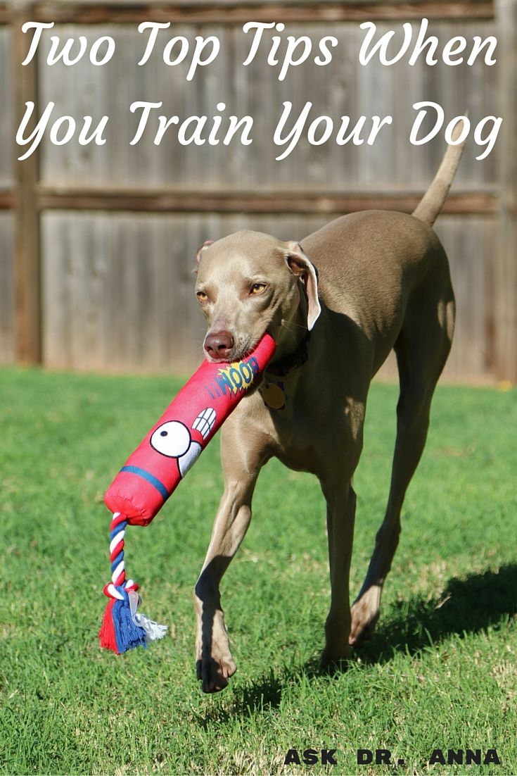 Two Top Tips When You Train Your Dog Dog Training Dogs