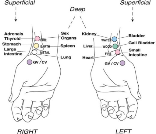 Acupuncture pulse points used at the wrist. From Walker ...