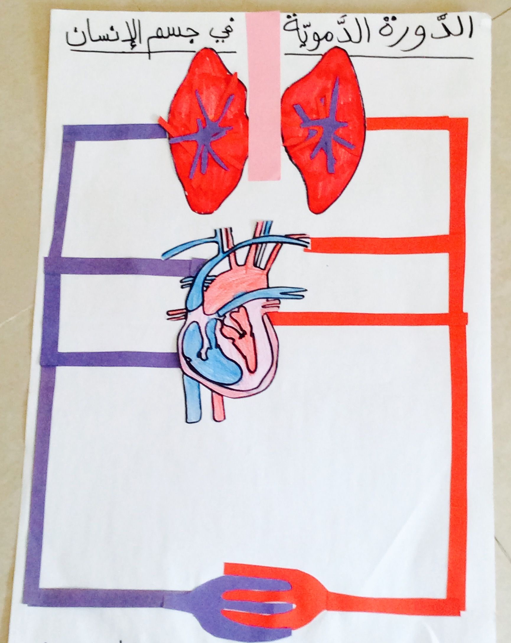 Circulatory System Project For Kids Picture Only