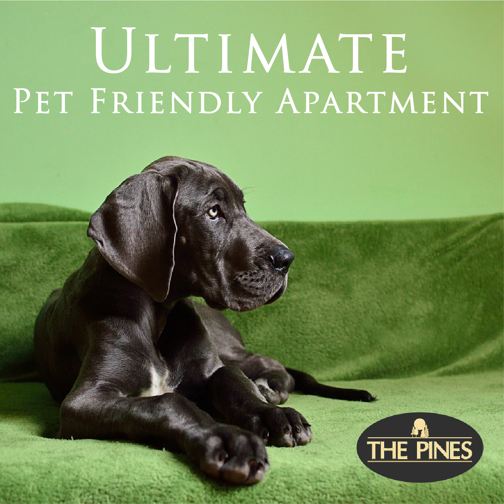 Ultimate #Pet Friendly #Apartment. #Rental Apartment #Home