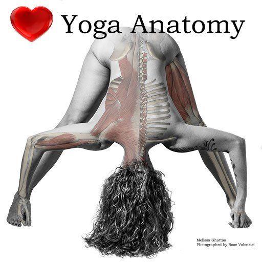 Afbeeldingsresultaat voor latissimus dorsi en yoga | latissimus ...