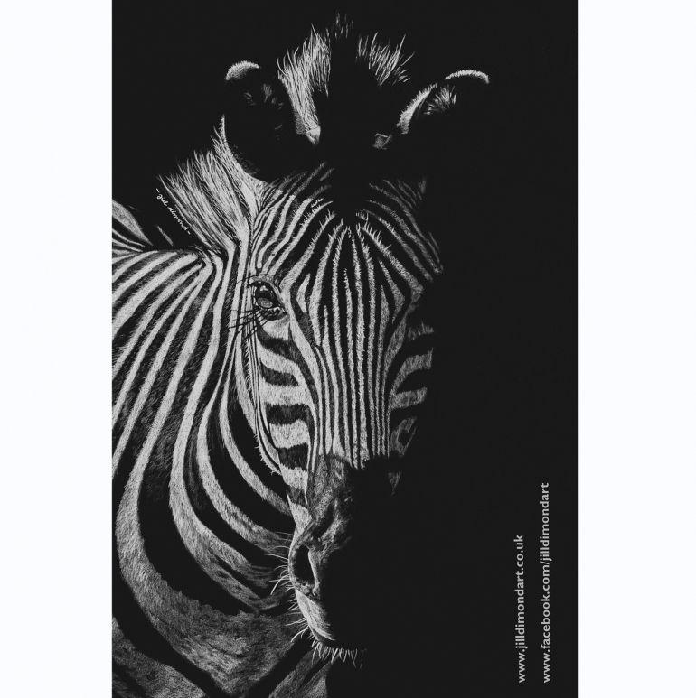 Zebra Coloured Pencil Drawing On Black Paper Dark Stripe