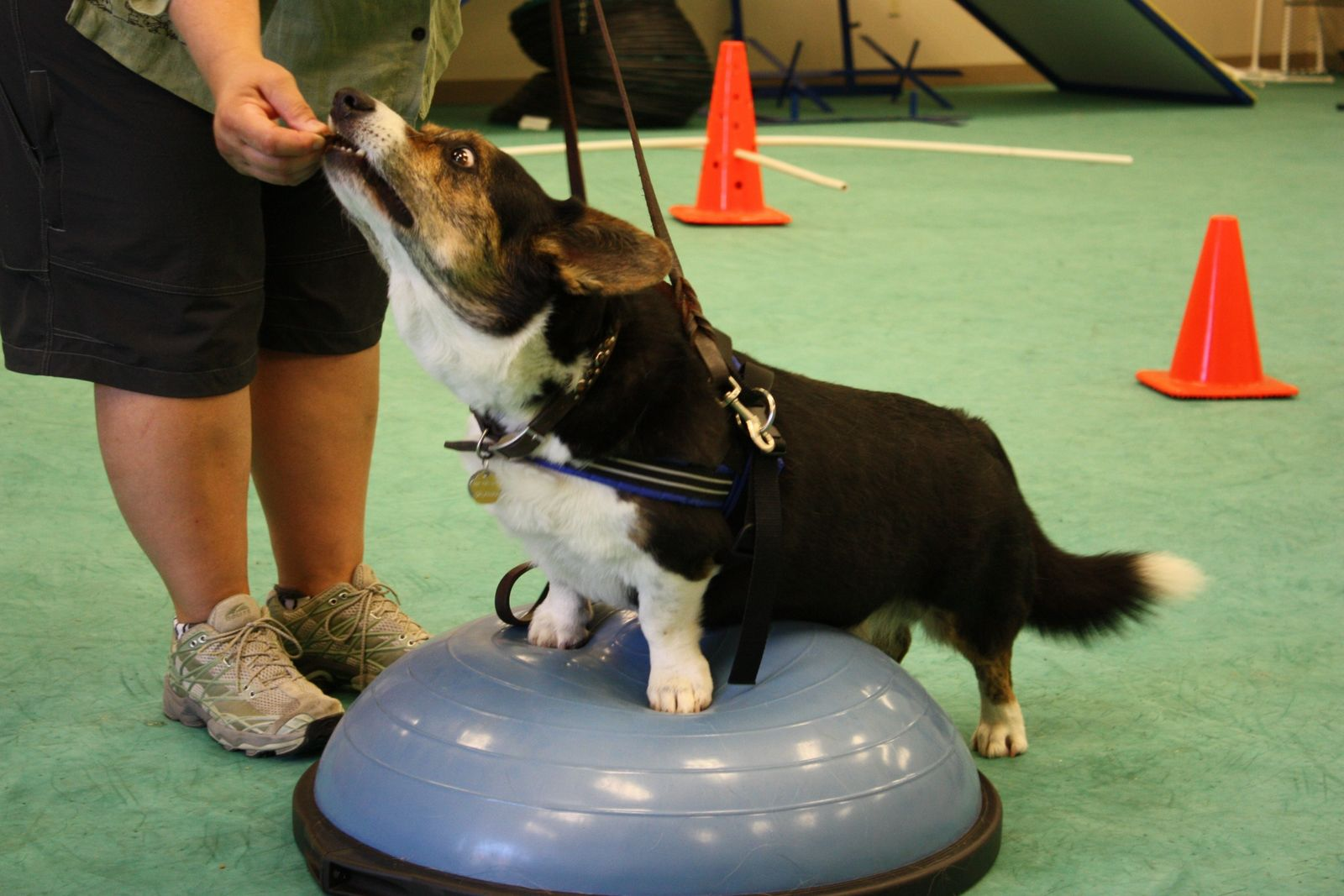 Bosu ball exercises Ball exercises, Bosu ball, Sports