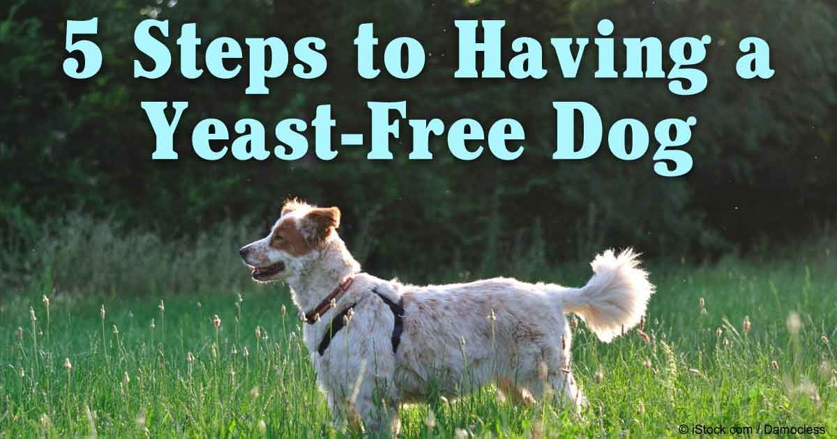 Does Grain Free Dog Food Help With Yeast Infection