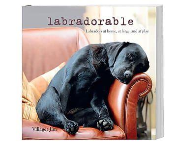 Libro 'Labradorable', 19 x 19 cm