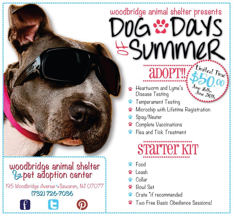 Summer Dog Adoption Promotion Extended Through July 31st Pet Adoption Center Animal Shelter Animal Rescue Fundraising