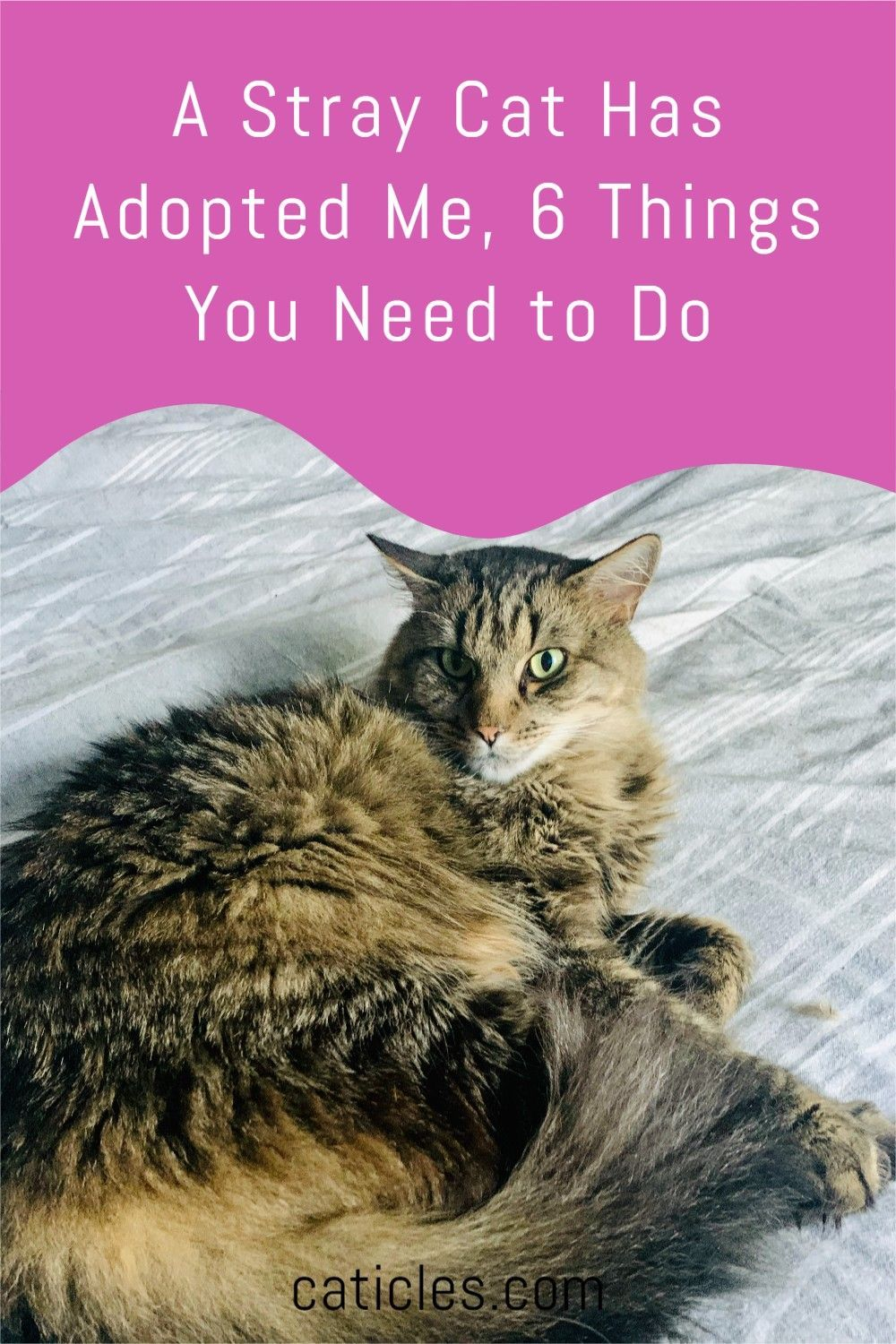A Stray Cat Has Adopted Me 6 Things You Need To Do Cats Stray Cat Cat Ages