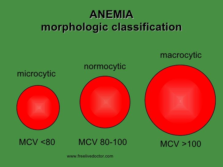 normocytic, normochromic anemia should be first evaluated with a, Skeleton