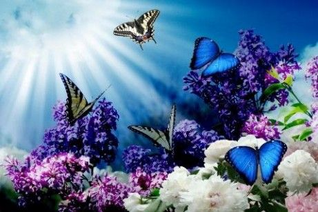 3d Butterfly Hd Live Wallpaper App For Android Beautiful Butterflies Butterfly Wallpaper Butterfly
