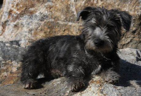 The Terrier Breeds – Different Dogs With Much in Common « Sunshine ...