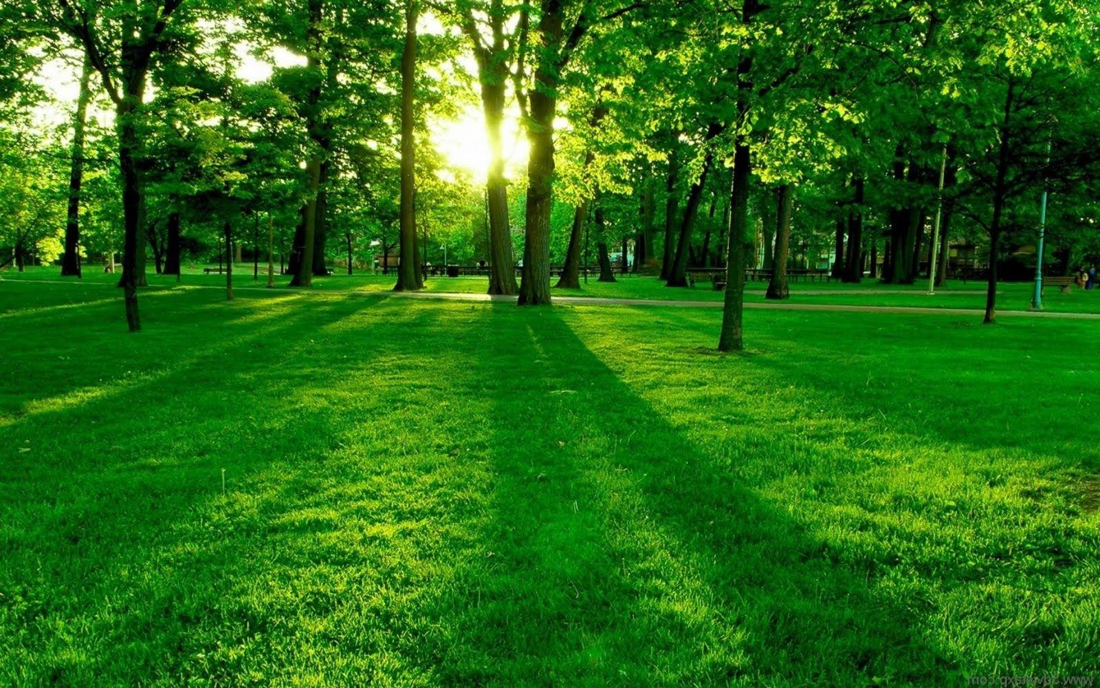 Beautiful Green Grass Wallpapers Spring Wallpaper Grass