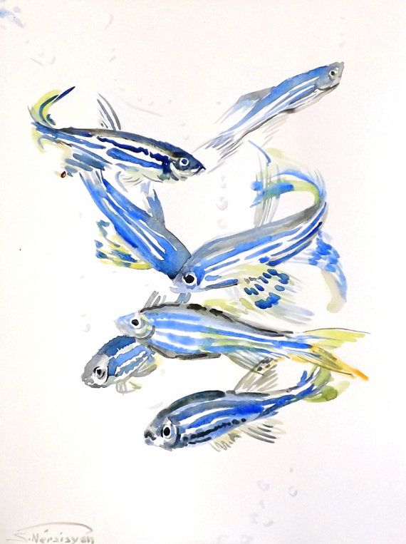 Zebrafish Original Watercolor Painting Aquarium Fish Art