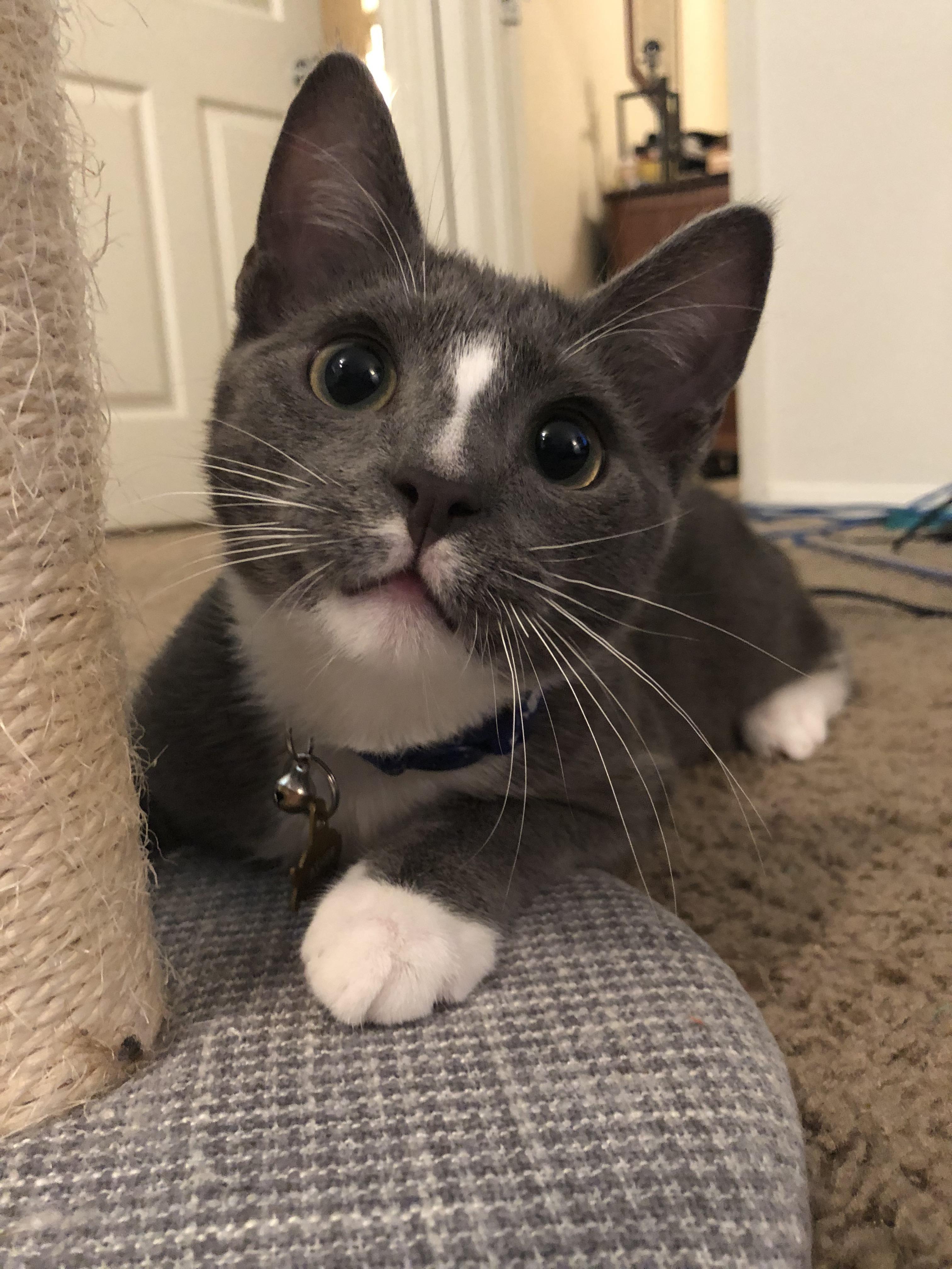 My sweet baby kitty Asher. Baby cats, Cat having kittens