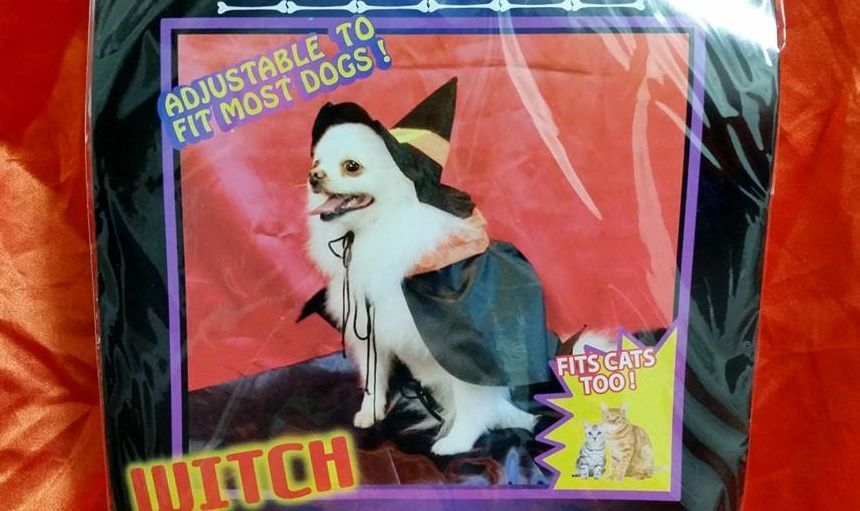 L@@K NEW FALL DOG PUPPY CAT KITTEN WITCH HALLOWEEN PET PARTY COSTUME S SMALL XS #GREENBRIERINTERNATIONAL