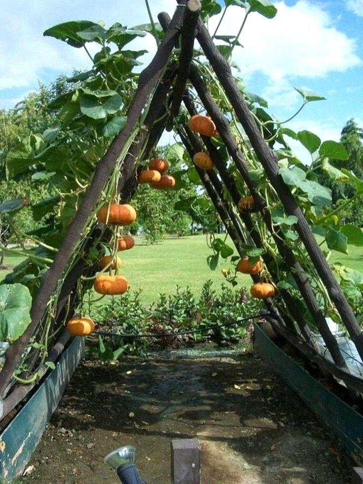 Planning a Vegetable Garden - A Peep Inside | Vegetable Garden Backyard Design | Vegetable Ga...