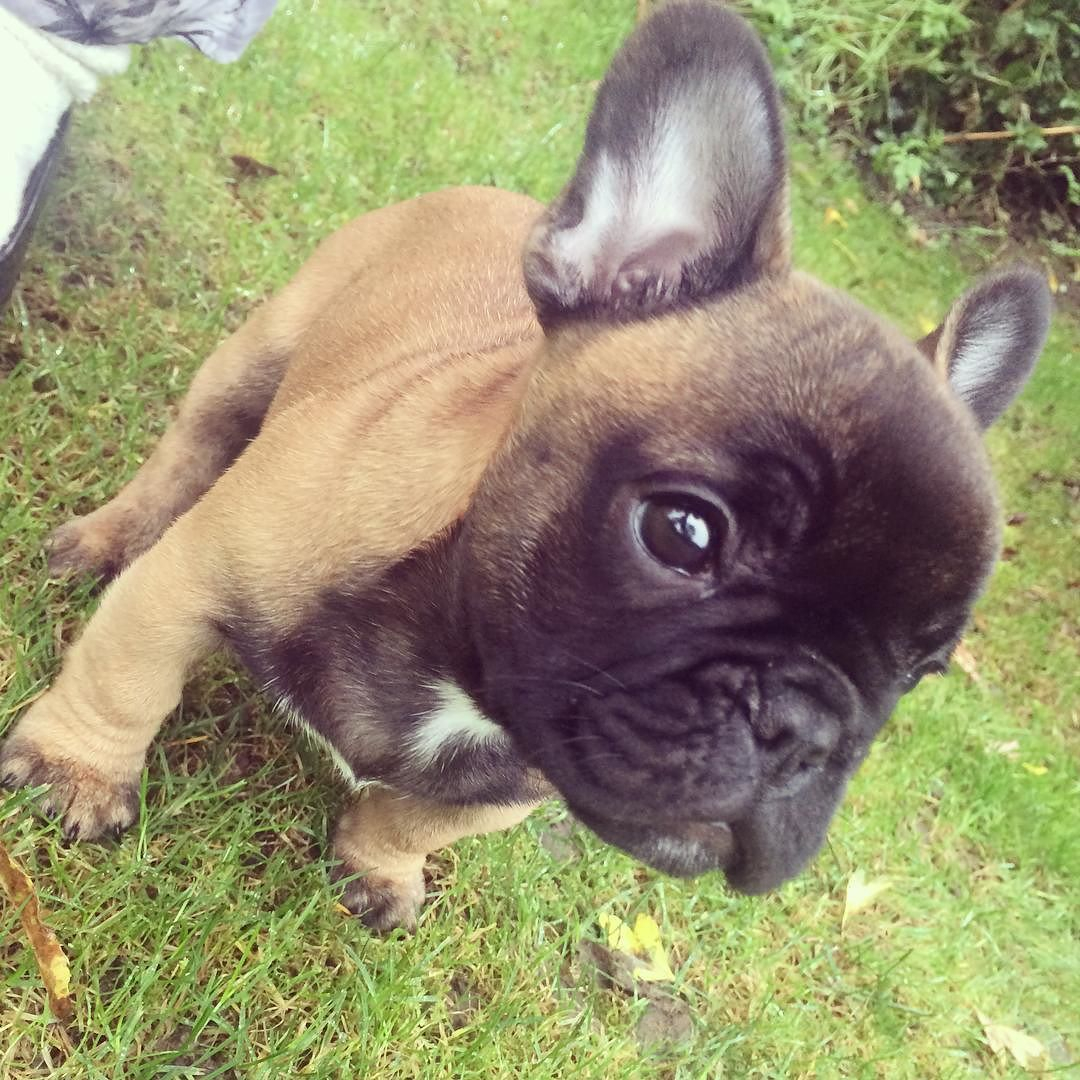 Batpig & Me Tumble It — Oh what an absolute cutey!!!!