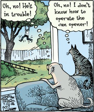 Difference Between Dogs And Cats Cartoon Jokes Cat Comics