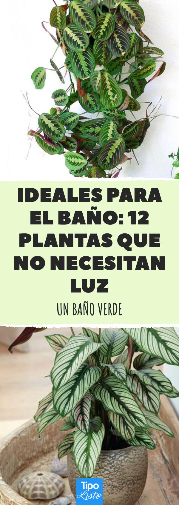 Ideales para el baño: 12 plantas que no necesitan luz # ...