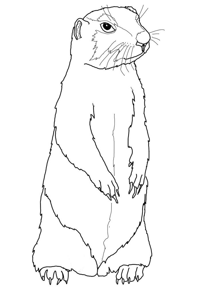 Prairie Dog Coloring Pages To Print Dog Coloring Page Animal