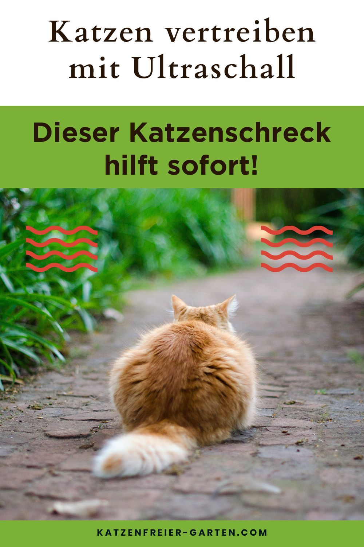 Dieser Katzenschreck Ultraschall Hilft Sofort Katzen Schreck Garten Landschaftsbau