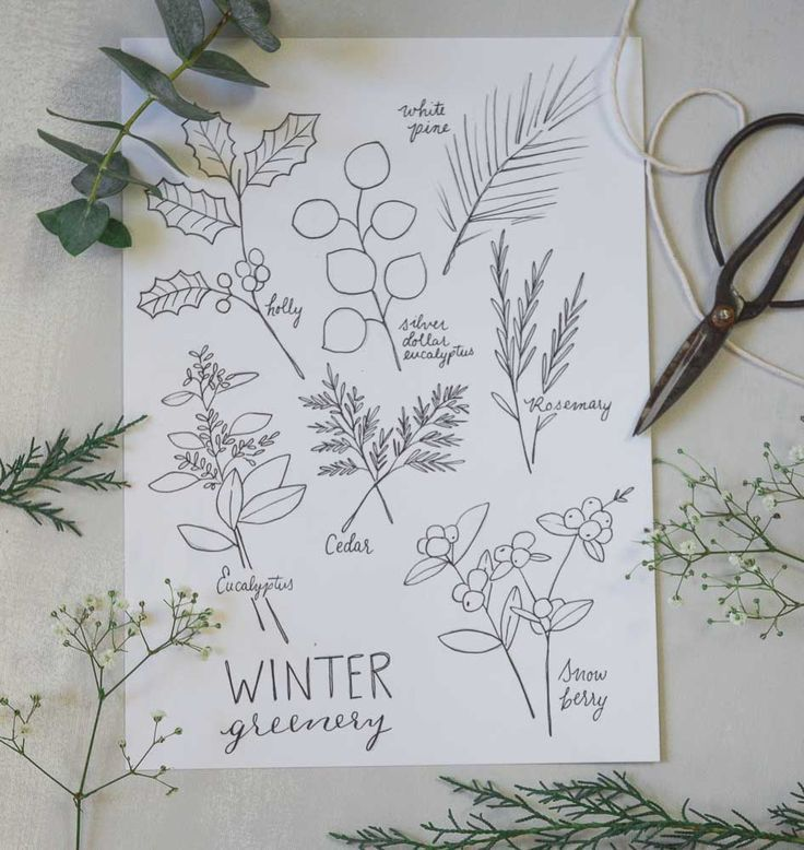 Winter Botanicals Coloring Pages Botanical line drawing