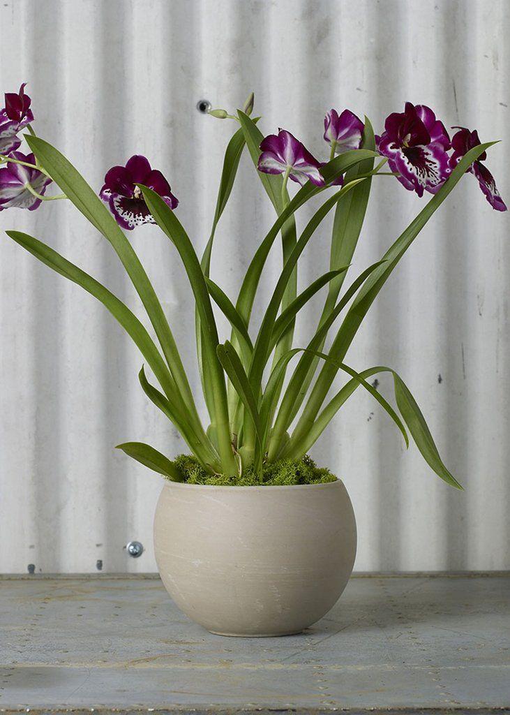 Ceramic pot in beige ceramic flower pots flower pots