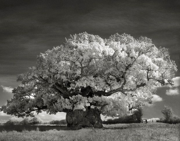 Surreal Black and White Photos Immortalize Oldest Trees on Earth | The Creators Project