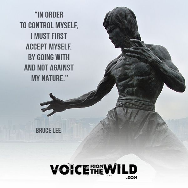 Voice from the Wild