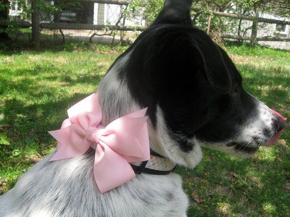 Popular Dog Collar Bow Adorable Dog - f3b1f6726cd9671c49682e44c00c1abb  Graphic_924024  .jpg