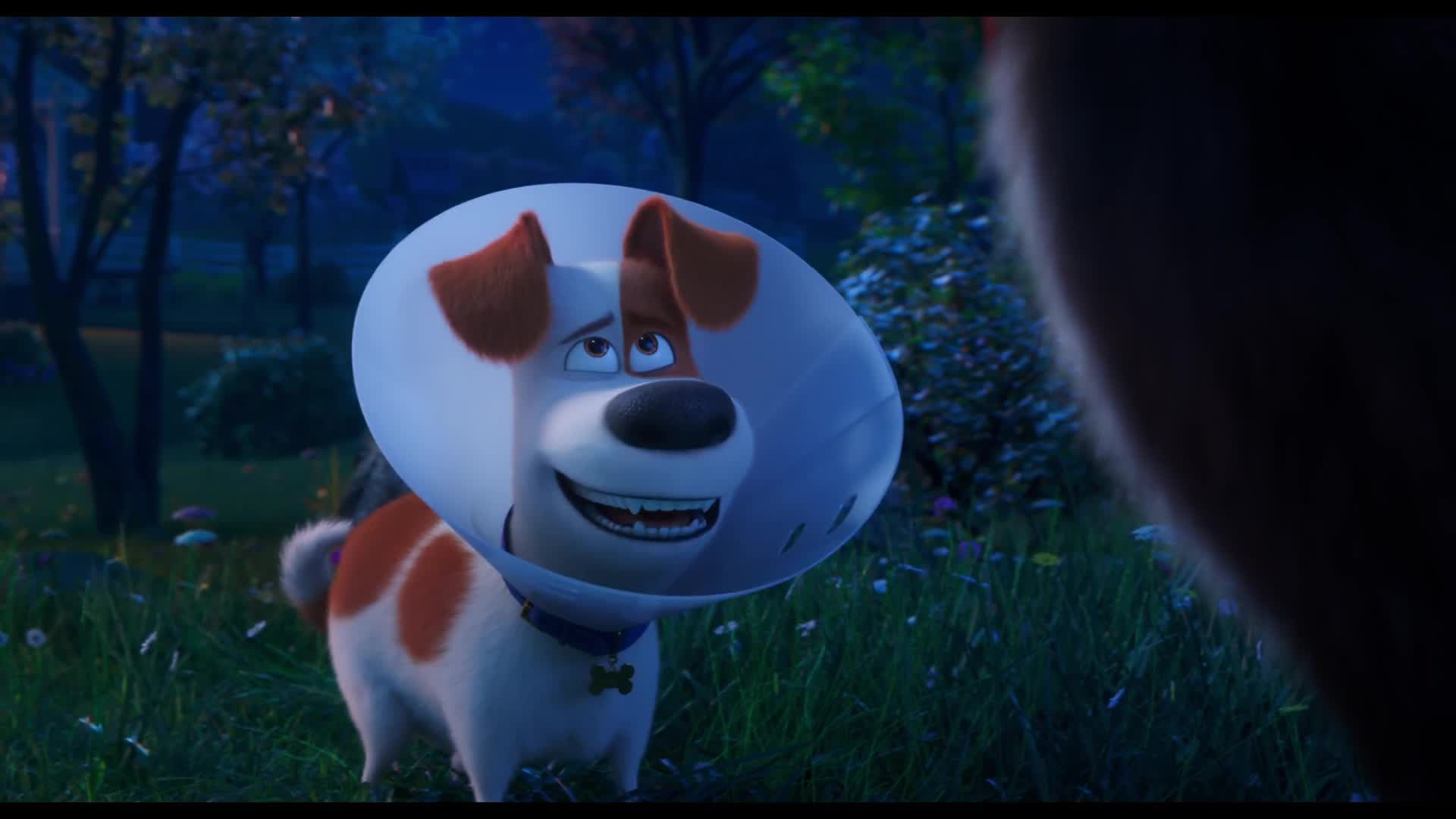 See The Final Trailer For The Secret Life Of Pets 2 In Theaters June 7 2019 Secret Life Of Pets Secret Life