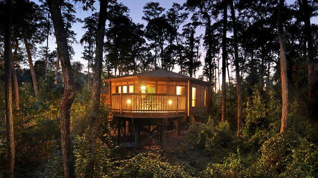 The Treehouse Villas At Disney S Saratoga Springs Resort