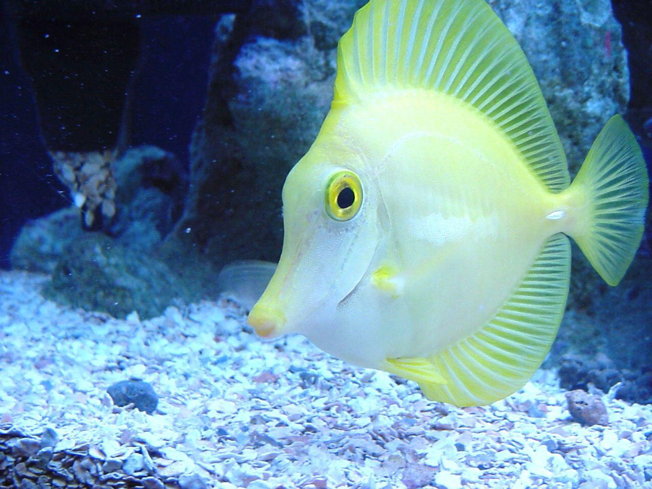Animal Fish Desktop Hd Wallpapers Beautiful Fish Fish Wallpaper Salt Water Fishing
