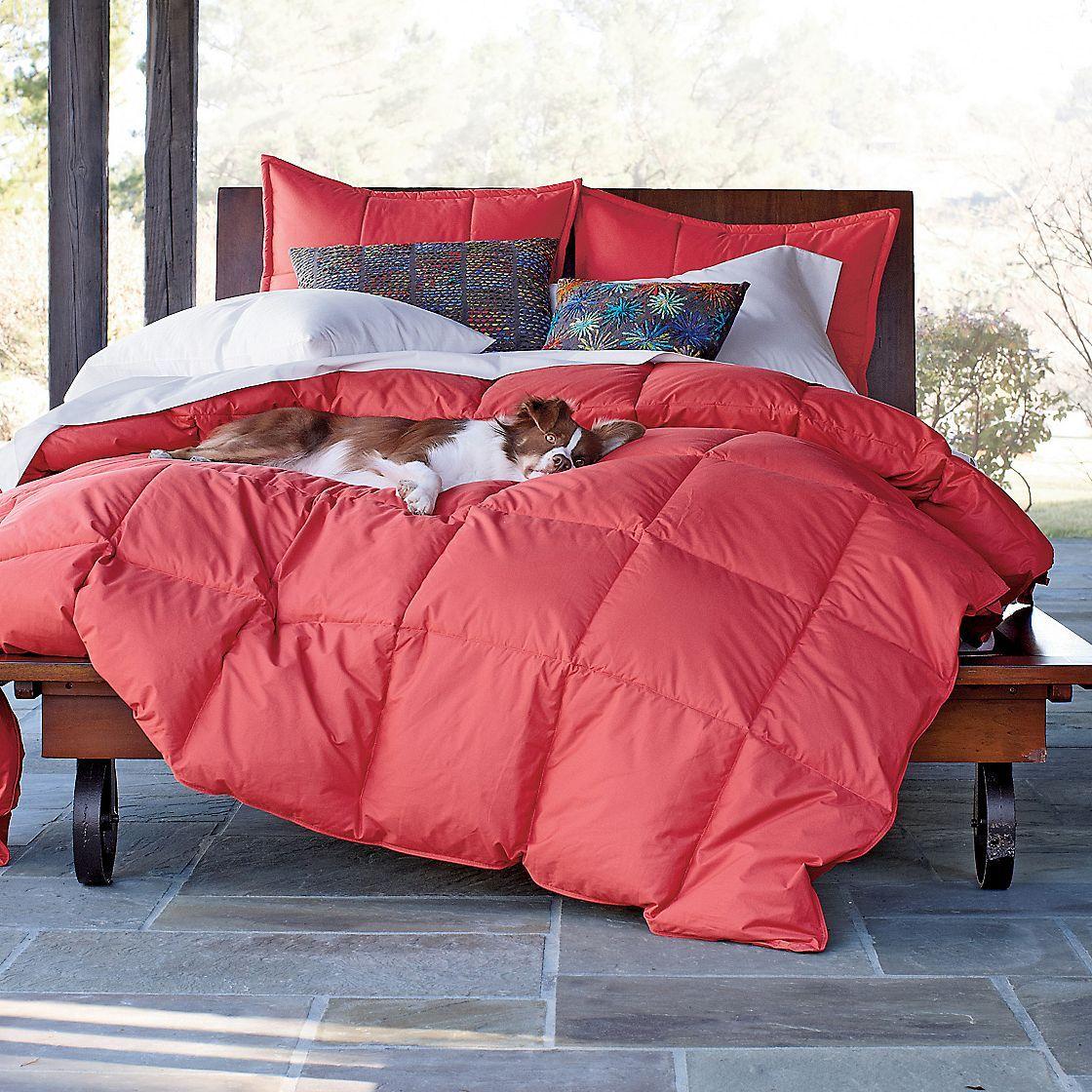 manor coral home avondale dp comforter kitchen cherie piece queen com amazon set
