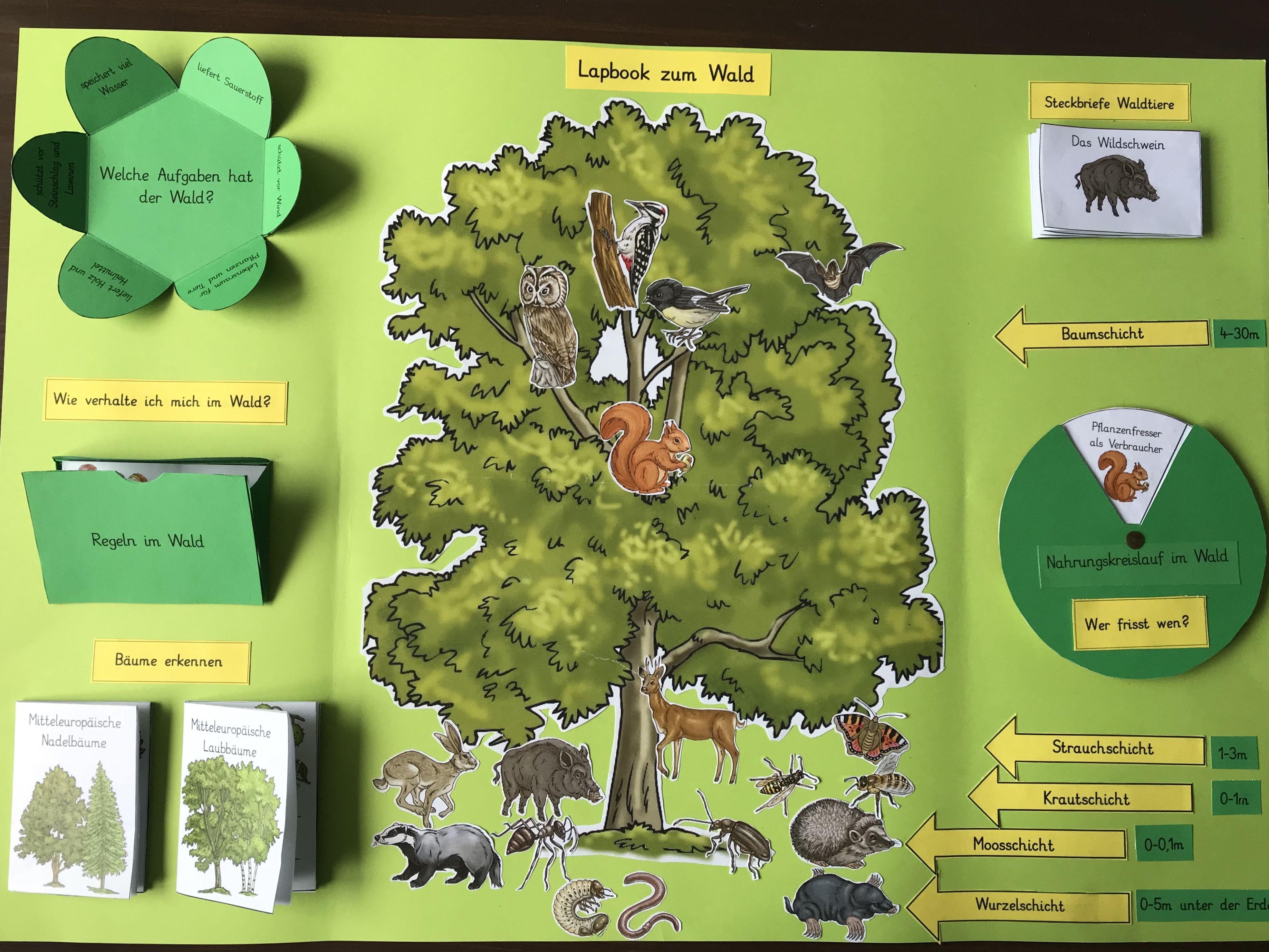Lapbook Zum Thema Wald