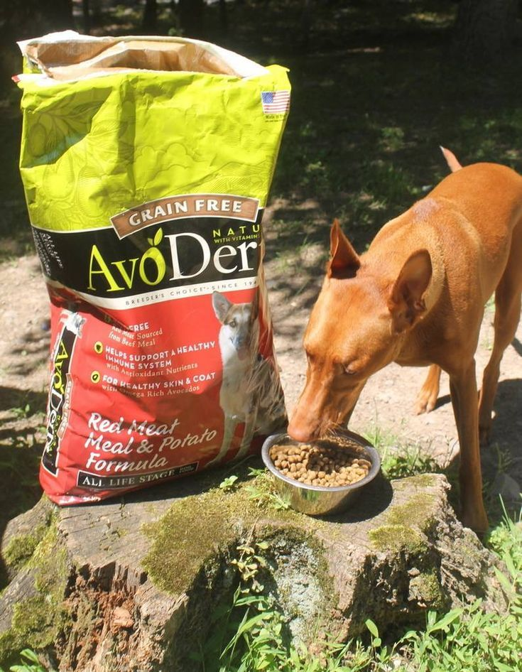 AvoDerm Natural Dog Food Review 3 Reasons Why it's STILL