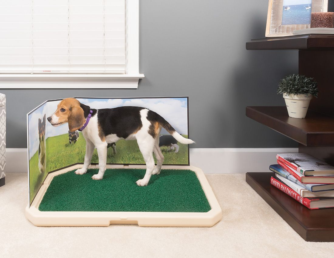 The Piddle Place - Indoor Dog Toilet | Dog toilet, Dog and Cat